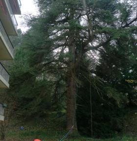 élagage et abattage arbre 38 Isère