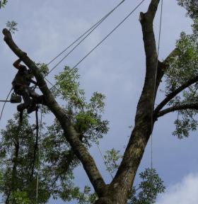 abattage ou élagage arbre